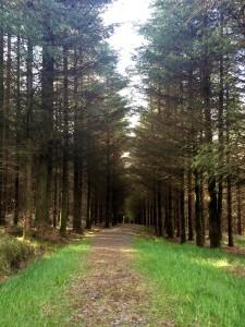 Glenafelly Walk Kinnitty Offaly Slieve Blooms Laois Ireland
