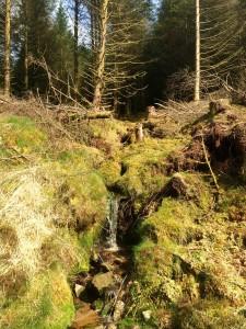 Glenafelly Walk Slieve Blooms Offaly Laois Ireland