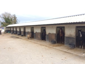 Slieve Aughty Galway Horses Stables Ireland