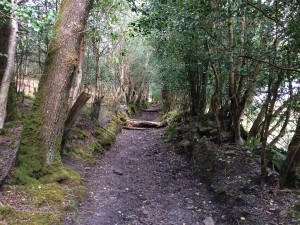 Slieve Aughty Horse riding trail Galway Ireland