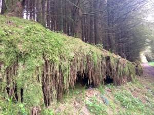 Woodland Devil's Bit Tipperary Ireland