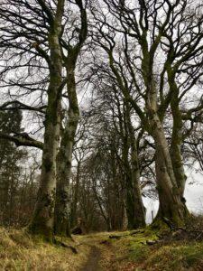 Glinsk Castle Looped Walk Slieve Bloom mountains Kinnitty Offaly