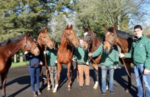 Irish National Stud Kildare Ireland Living Legends Paddock