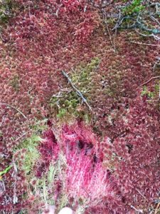 Spagnum moss herbs mountains Slieve blooms Ireland's ancient east Laois Offaly Ireland outdoors hill walking nature