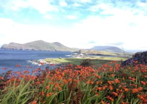Beginish Lighthouse Valentia Montbretia wild flowers Kerry Ireland Wild Atlantic Way