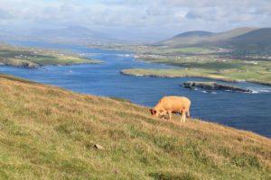 Bray Head Valentia Kerry Ireland Wild atlantic Way