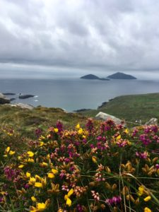 Scarriff & Deenish islands outside Derrynane bay from Kerry Way walk Waterville Caherdaniel Wild Atlantic Way Ireland