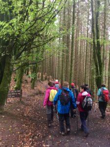 Beginning fungi walk slieve bloom mountains Laois Ireland autumn