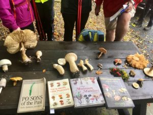 Mushroom hunting Slieve Bloom mountains Laois Ireland autumn foraging