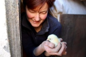 Trish Butler free range chicken Butler's Family Farm day old chick