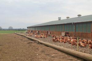 Granstown free range eggs ballacolla Laois ireland Food heroes