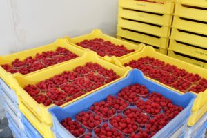 Strawberries, Blueberries & Raspberries ready to go at Rose Cottage Fruit Farm, Co. Laois.