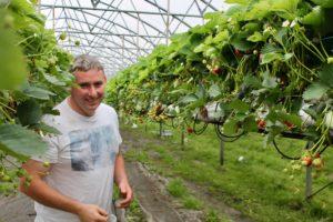 strawberry tunnel kevin phelan rose cottage fruit farm laois ireland
