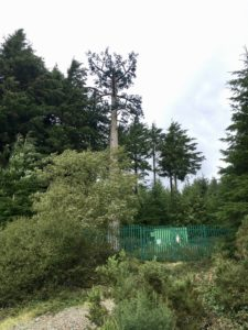 the fake tree coumshingaun lough lake walk trail ireland irelands ancient east