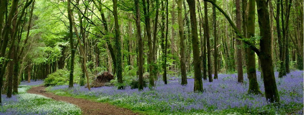 Dunmore woods Durrow leafy loop walk Laois walking trails what to do in Laois where to go what to see