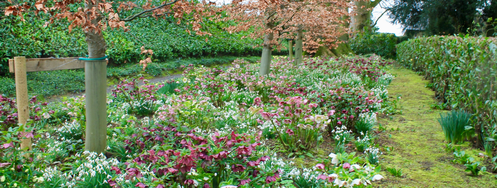 Altamount Gardens Carlow Garden trail Ireland Ireland's Ancient East Snowdrop month February 2019 what to do weekends snowdrop walks walks