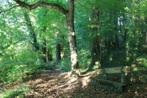 Sit and take in the views and the sounds at Ballyrafton woods Kilkenny
