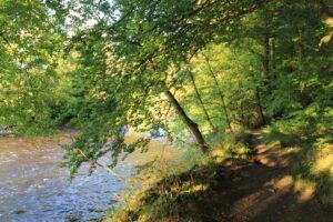 Sunset river walk Ballyrafton woods Kilkenny eat and Explore.ie