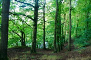 Surrounded by native woodland at Ballyrafton Kilkenny